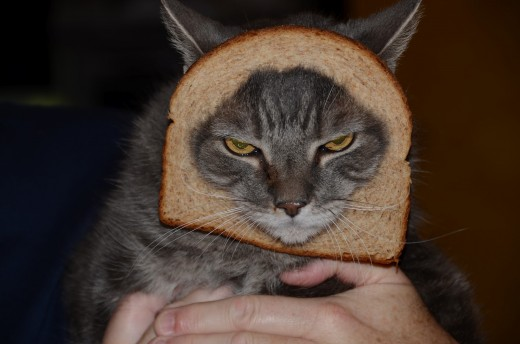 Cats in bread, cat breading