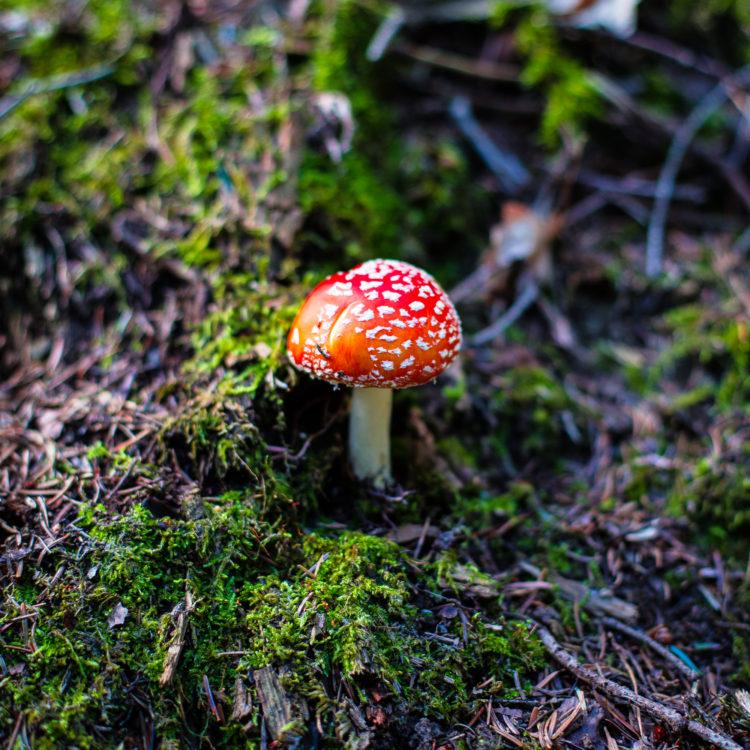 Un champi dans la forêt